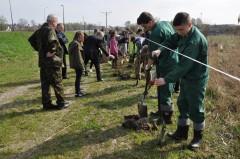1050 drzew ikrzewów na 1050. rocznicę chrztu Polski