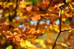 4 sposoby na piękny ogród które musisz poznać
