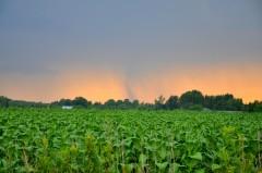 W Sejmie oproblemach plantatorów tytoniu