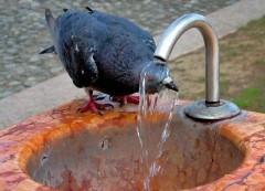 Kolejne kontrole wody. Znów wykryto bakterie