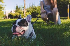 Czy pies musi mieć smycz ikaganiec?