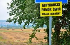 Na terenie powiatu znaleziono dziki zarażone ASF