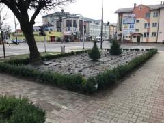 120 nowych drzew i2207 krzewów