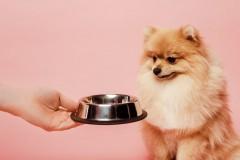 Czym karmić psa? Kieruj się jego dobrem!