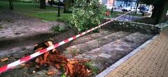 Połamane drzewa, uszkodzone ogrodzenie kościoła