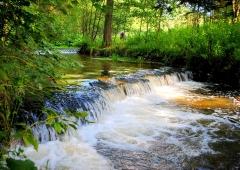 Tanew rzeką roku?