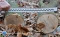 68-latek przygnieciony przez drzewo