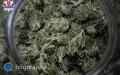 2,5 kilograma suszu marihuany ibroń palna wmieszkaniu 32-latka