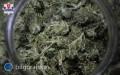 Biłgorajscy kryminalni zabezpieczyli prawie 5,5 kg narkotyków
