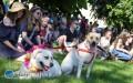 Animal Party, czyli święto miłośników zwierząt
