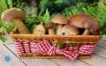 Domowe suszenie grzybów: jak robić to prawidłowo?