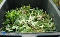 Ulga dla posiadaczy kompostowników