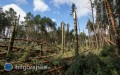 Nawałnice nie ominęły lasów. Wprowadzono okresowy zakaz wstępu