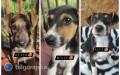 3 szczeniaki szukają nowych domów, apel opomoc wznalezieniu pozostałych psów